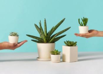 مراقبت از گیاهان