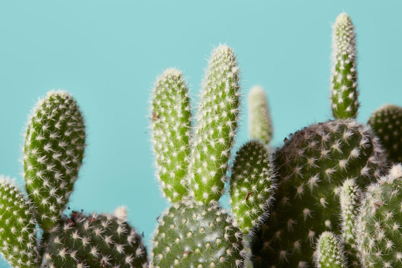 مزایای داشتن گیاه در خانه