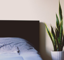 گیاهان اتاق خواب