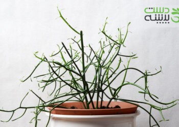 گیاه جون من یه برگ بده